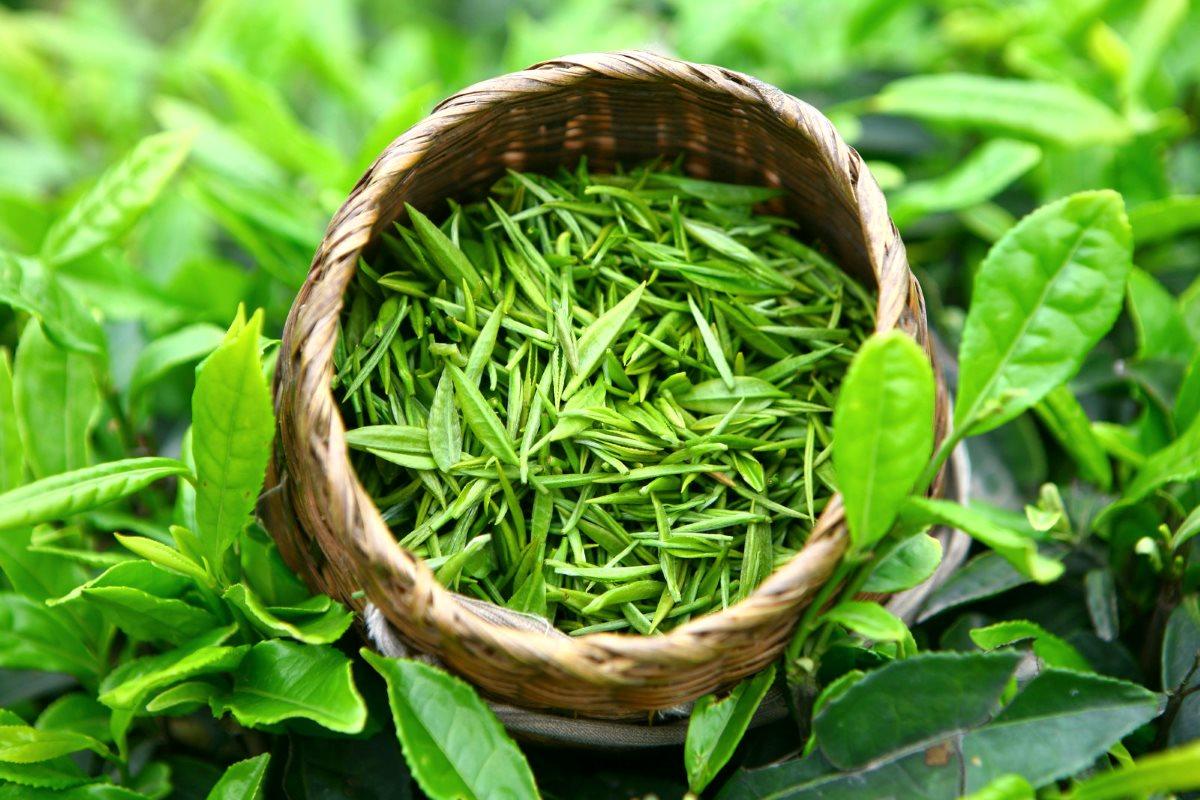 علاج-فرط-التصبغ-بالأعشاب